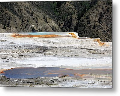 Canary Spring At Mammoth Hot Springs Upper Terraces Metal Print by Louise Heusinkveld