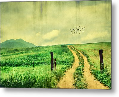 Country Roads Metal Print by Darren Fisher