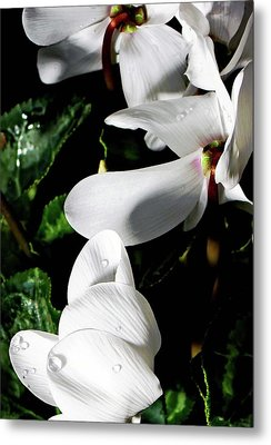 Metal Print featuring the photograph Cyclamen by Mindy Newman
