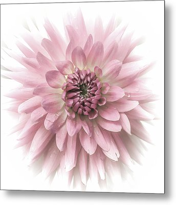 Dreamy Dahlia Metal Print by Julie Palencia