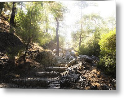 Enchanted Forest Metal Print by Joana Kruse