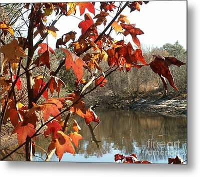 Fall On The Withlacoochee River Metal Print