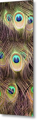 Metal Print featuring the photograph Fan Of Feathers by Joye Ardyn Durham