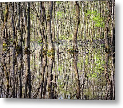 Forest In The Swamp Metal Print by Catalin Petolea