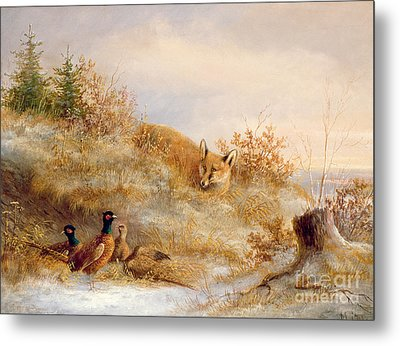 Fox And Pheasants In Winter Metal Print by Anonymous