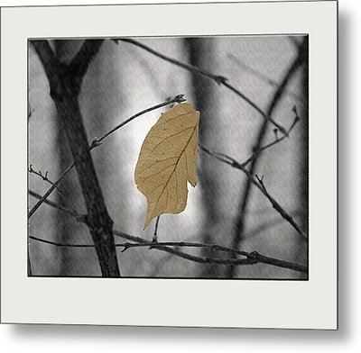 Hanging In The Balance Metal Print by Sue Stefanowicz