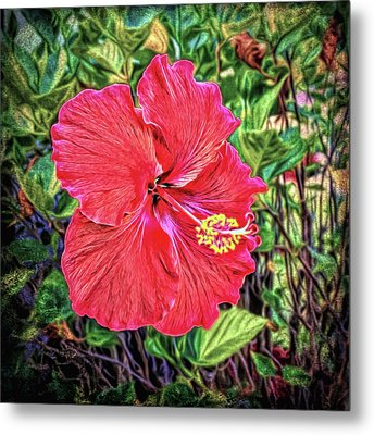 Metal Print featuring the photograph Hibiscus Flower by Lewis Mann