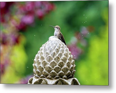 Hummingbird On Garden Water Fountain Metal Print by David Gn