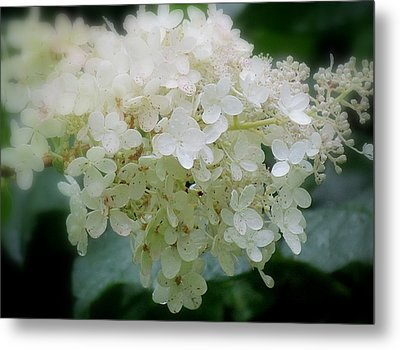 Metal Print featuring the photograph Hydrangea by France Laliberte