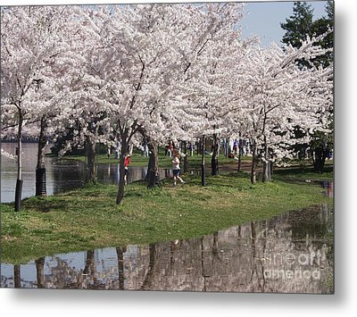 Japanese Cherry Blossom Trees Metal Print by April Sims