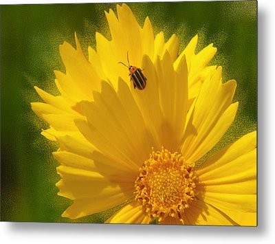 Lady Bug Lookout Metal Print by Paul Anderson