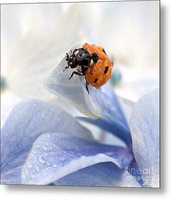 Ladybug Metal Print by Nailia Schwarz