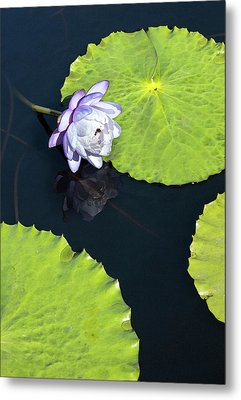 Lily Love Metal Print by Suzanne Gaff