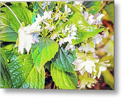 Metal Print featuring the photograph Little Orchids by Mindy Newman