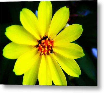 Oh Sunny Day Metal Print by Hannah Miller