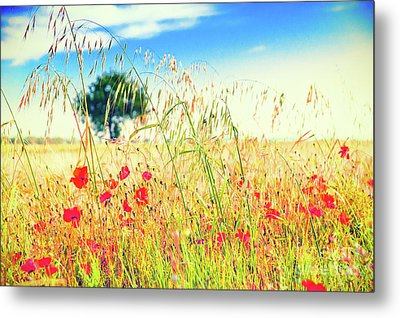 Metal Print featuring the photograph Poppies With Tree In The Distance by Silvia Ganora