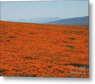 Poppy Field II Metal Print