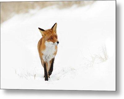 Red Fox In A White Winter Wonderland Metal Print by Roeselien Raimond