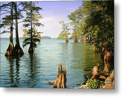 Metal Print featuring the photograph Reelfoot Lake by Bonnie Willis