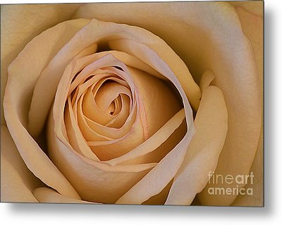 Rose Metal Print by Adrian LaRoque