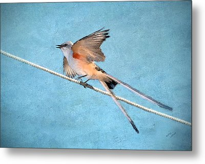 Scissor-tailed Flycatcher Metal Print by Betty LaRue