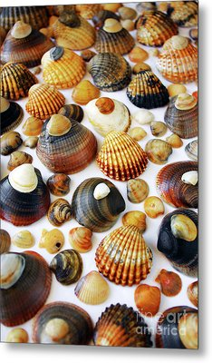 Shell Background Metal Print by Carlos Caetano