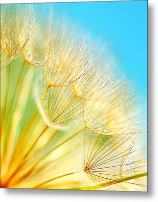 Soft Dandelion Flowers Metal Print