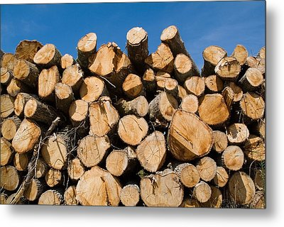 Stack Of Wooden Logs In The Landes Forest Metal Print by Sami Sarkis