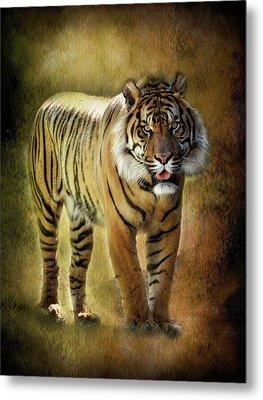Sumatran Tiger  Metal Print by Saija  Lehtonen