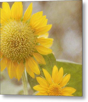 Sunflower Metal Print by Kim Hojnacki