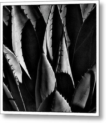 Sunlit Cactus Metal Print