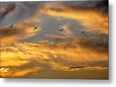 Sunset Flight Metal Print by AJ Schibig