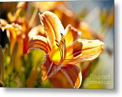 Tiger Lily Flower Metal Print by Elena Elisseeva