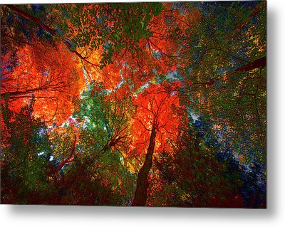 Tree Tops Metal Print by David Stasiak