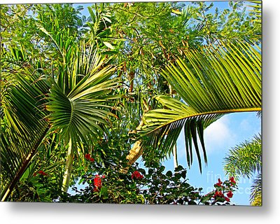 Tropical Plants Metal Print by Zalman Latzkovich