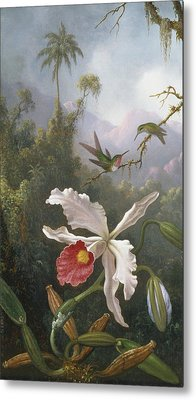 Two Hummingbirds Above A White Orchid Metal Print