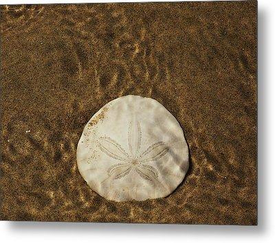 Underwater Sand Dollar Metal Print by Angi Parks