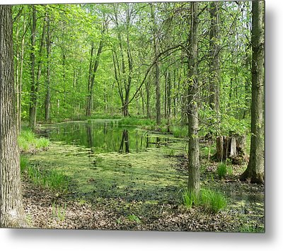 Vernal Pool Metal Print
