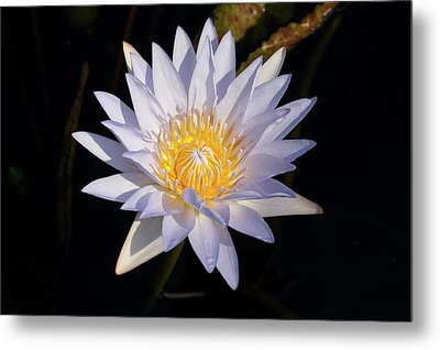 Metal Print featuring the photograph White Water Lily by Steve Stuller