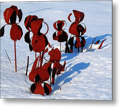 Winter's Garden Metal Print by Randy Rosenberger