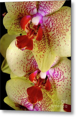 Metal Print featuring the photograph Yellow Orchid by Dariusz Gudowicz