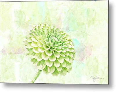 10891 Green Chrysanthemum Metal Print