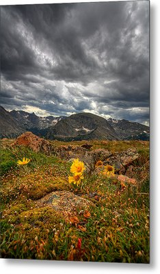 12000 Foot Flower Metal Print by Peter Tellone