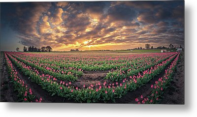 Metal Print featuring the photograph 180 Degree View Of Sunrise Over Tulip Field by William Lee