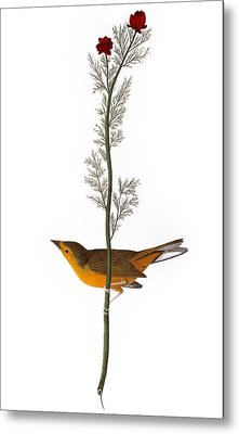 Audubon: Warbler, (1827) Metal Print by Granger