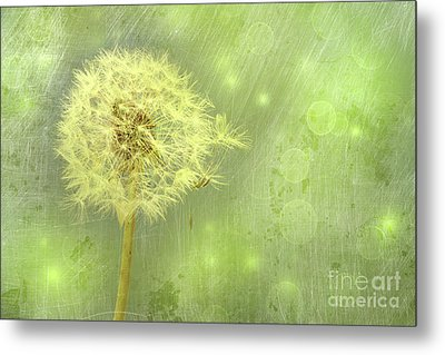 Closeup Of Dandelion With Seeds Metal Print