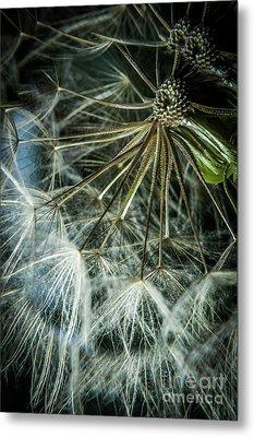Dandelions Metal Print by Iris Greenwell