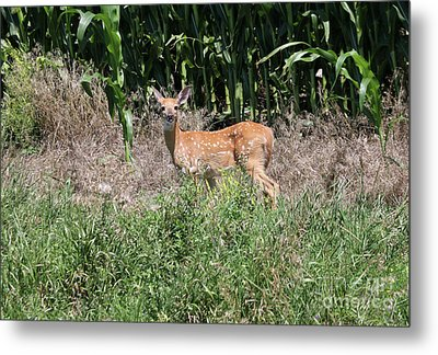 Fawn In The Grass Metal Print
