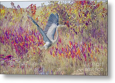 Fly Fly Away Metal Print by Judy Kay