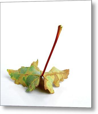 Leaf Metal Print by Bernard Jaubert